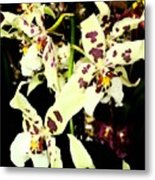 Orchid Fresco Metal Print