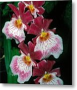 Orchid Group Metal Print
