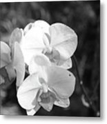 Orchid In Black And White Metal Print