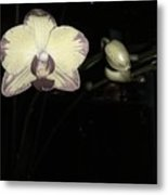Orchid In Bloom Metal Print