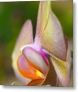 Orchid In Profile Metal Print