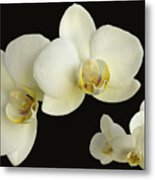 Orchid Montage Metal Print