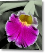 Orchid Of A Different Color Metal Print