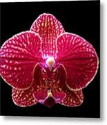 Orchid On Black 2 Metal Print