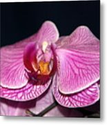 Orchid Orchid Metal Print