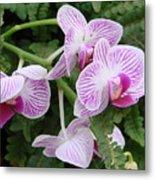 Orchid Pink Metal Print