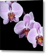 Pink Orchid I Metal Print