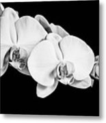 Orchid - Bw Metal Print