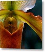 Orchid Slipper Metal Print