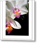 Orchid Spring Poster Metal Print