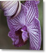 Orchid Strips Metal Print