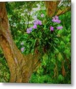 Orchid Tree Metal Print