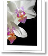 Orchid Underneath Poster Metal Print