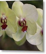 Orchid White Trio Metal Print