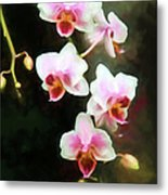Orchids Abound Metal Print