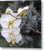 Orchids And Water Metal Print