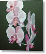 Orchids For Didi Metal Print