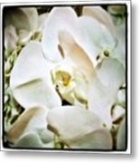 Orchids For His Majesty. In Loving Metal Print