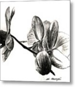 Orchids In Black Metal Print