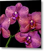 Orchids In Bloom Metal Print