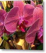 Orchids In Bloom Metal Print