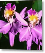 Orchids In Costa Rica Metal Print