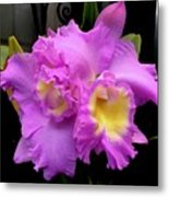 Orchids In Fuchsia  Metal Print