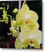 Orchids In New York Metal Print