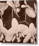 Orchids In Sepia Metal Print
