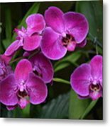 Orchids In Vivid Pink  Metal Print