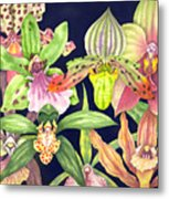 Orchids  Metal Print by Lucy Arnold