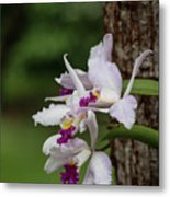 Orchids On A Tree Metal Print