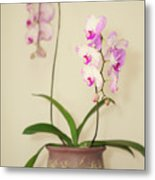 Orchids On Sideboard Metal Print