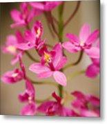 Orchids On Stem Metal Print