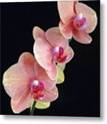 Orchids Reach For The Rainbow Metal Print