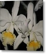 Orchids Satin Metal Print