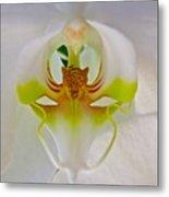 Orchids Secret Metal Print