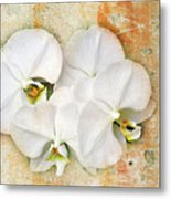 Orchids Upon The Rough Metal Print
