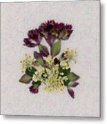 Oregano Florets And Leaves Pressed Flower Design Metal Print
