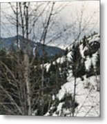 Oregon Cascade Range Trees Metal Print