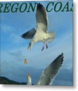 Oregon Coast Amazing Seagulls Metal Print