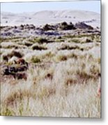 Oregon Dunes 6 Metal Print by Eike Kistenmacher