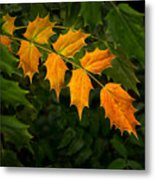 Oregon Grape Autumn Metal Print
