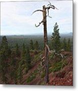 Oregon Landscape - Confused Tree At Lava Butte Metal Print