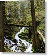 Oregon River Metal Print