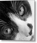 Oreo In Black And White Metal Print