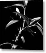 Oriental Lily Two Metal Print