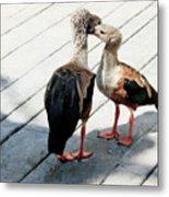 Orinoco Geese Touching Heads On A Boardwalk Metal Print