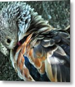 Orinoco Goose  Metal Print