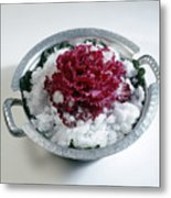 Ornamental Cabbage Metal Print